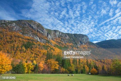Autumn leaves on trees along mountain