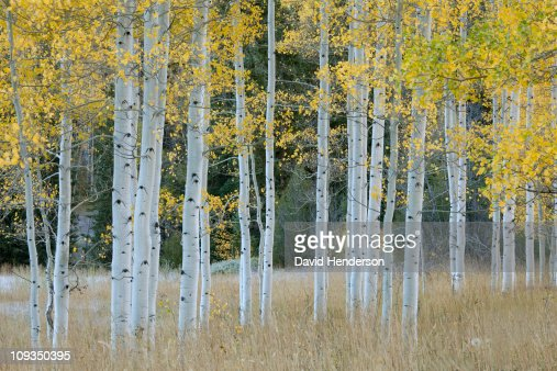 Autumn leaves on trees in forest