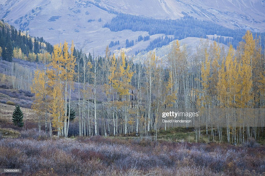 Autumn leaves on trees on hillside : Stock Photo