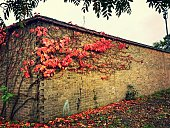 Autumn Leaves On Wall