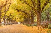 autumn leaves at Jingu Gaien