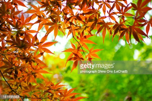 Autumn leaves : Foto stock