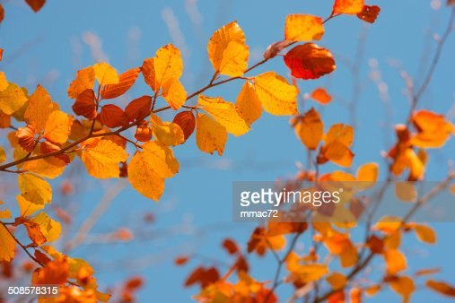 Autumn Leaves : Stockfoto