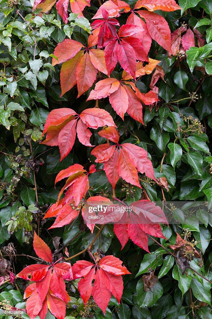 Folhas de Outono : Foto de stock