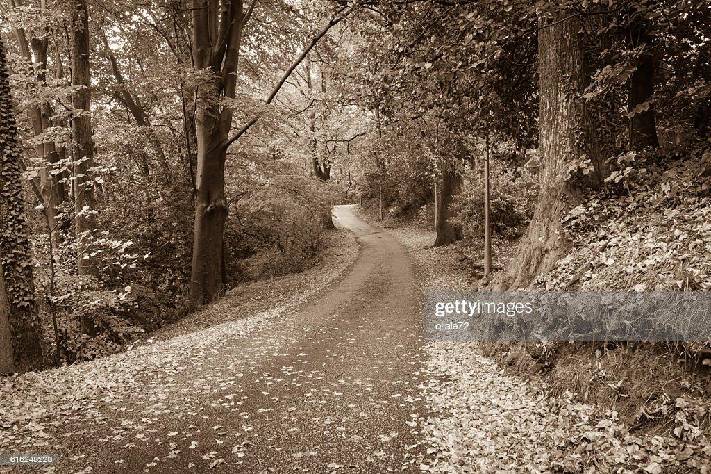 Autumn Leaves - Sepia Toned Image : Stock Photo