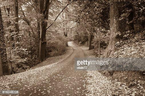 Autumn Leaves - Sepia Toned Image : Foto de stock