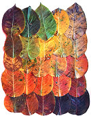 Canvas set of autumn leaves gradient from dark, orange, yellow, lying in a row on each other on a business background, isolated