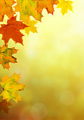 Autumn maple leaves and branches on a beautiful nature green yellow orange red bokeh forest bright colorful fall vertical background. Space for text.