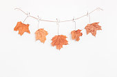 Autumn composition. Dried maple leaves on white background. Autumn, fall concept. Flat lay, top view, copy space