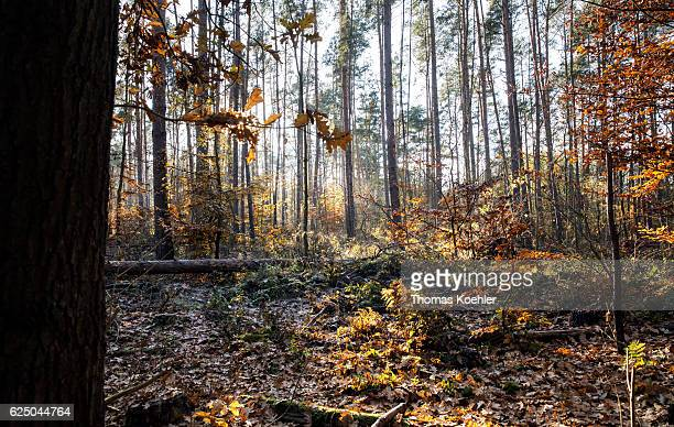 Autumn mood in the nature reserve Biesenthaler Becken on November 13 2016 in Biesenthal Germany