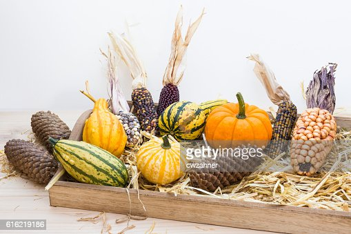 Autumn mood with decorative pumpkins : Photo