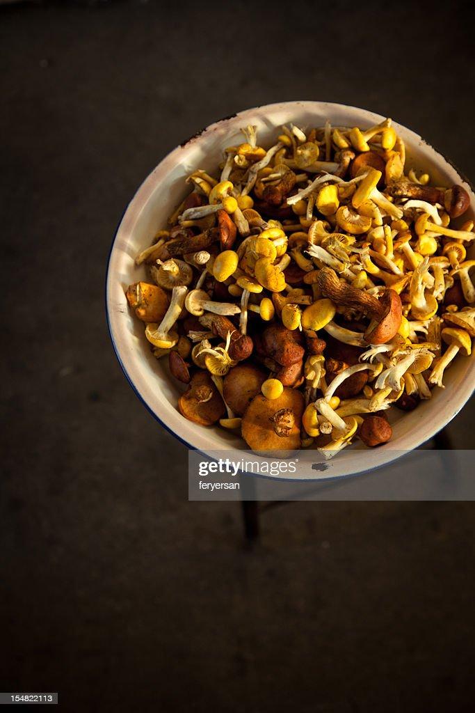 autumn mushroom : Stock Photo