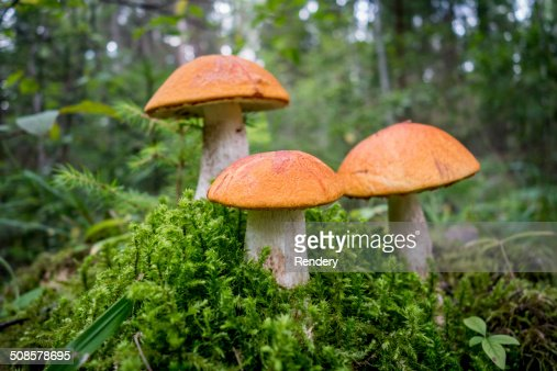 autumn mushrooms : Stockfoto