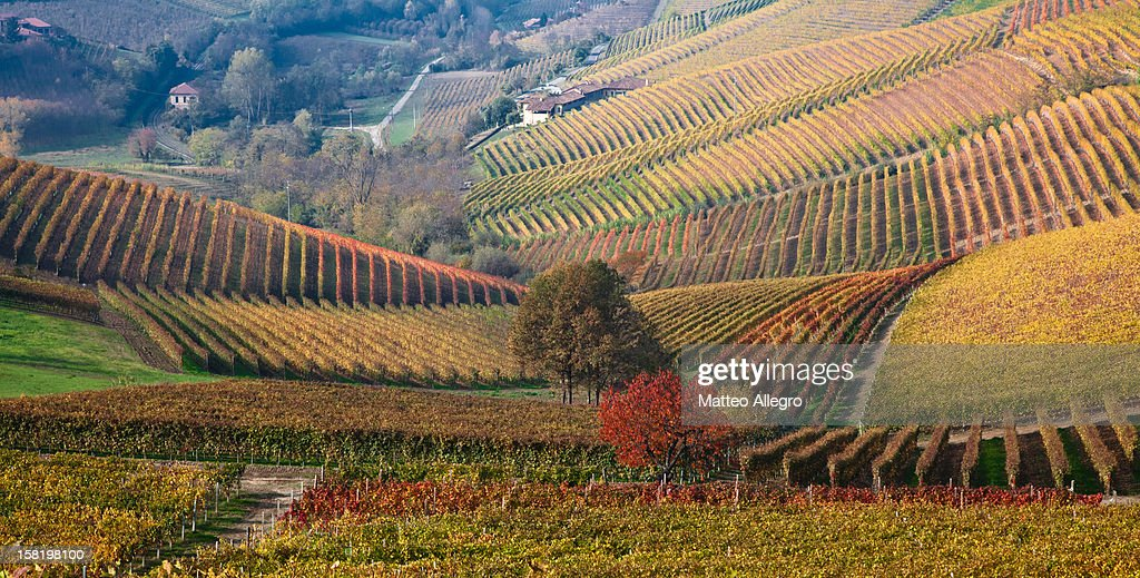 Autumn on the hills of Langhe and Monferrato #8