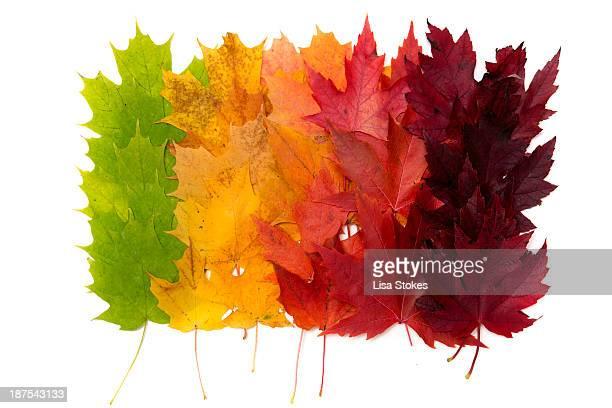 Autumn Ordered
