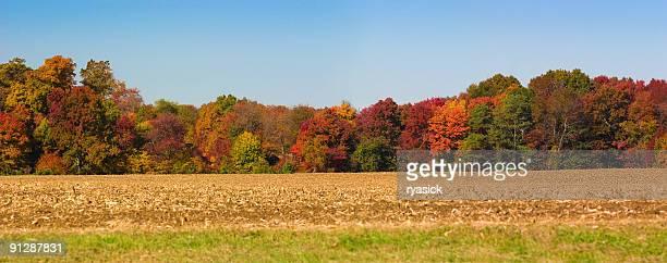 Autumn Panoramic Tree Line Along Cornfield Against Clear Blue Sky