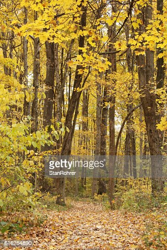 Autumn Path in Woods. Yellow Springs, Ohio : Foto de stock