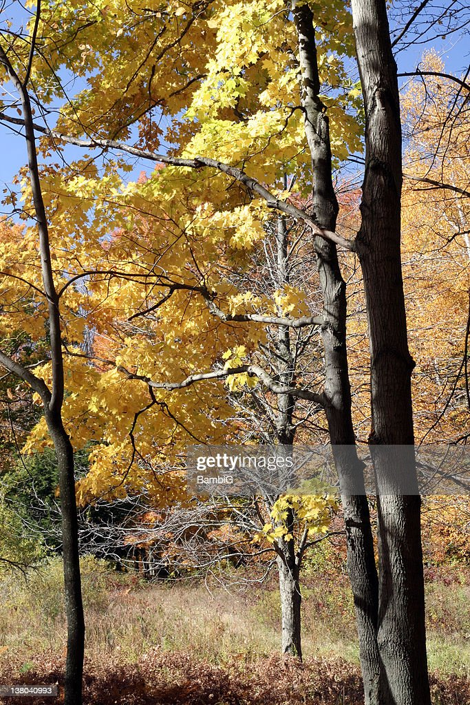Autumn : Stock Photo