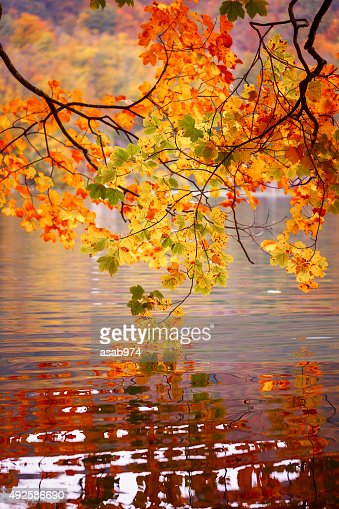 Autumn : Stock Photo