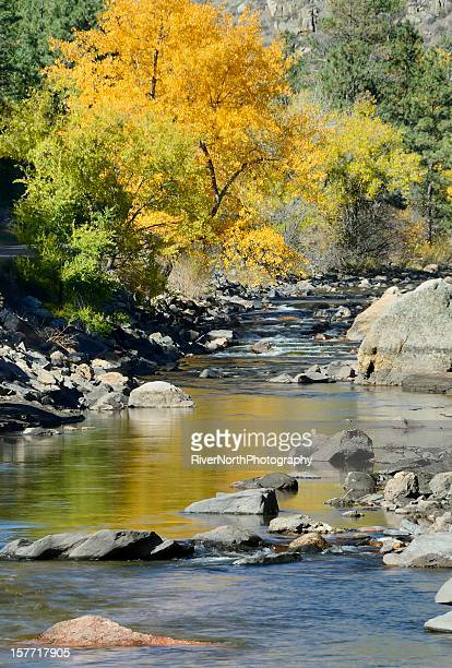 Autumn picture of the Poudre river with trees and rocks