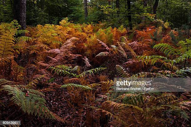 Autumn Plants Growing In Forest