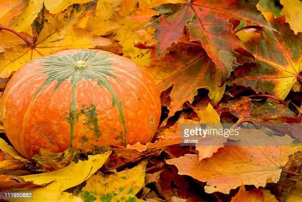 秋のパンプキン