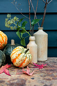 Autumn pumpkins and squash, with acer tree leaves