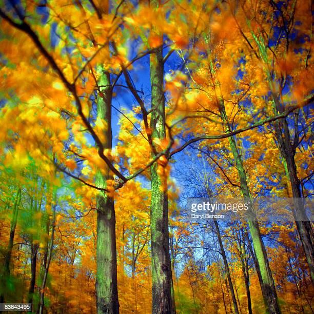 Autumn, Quebec