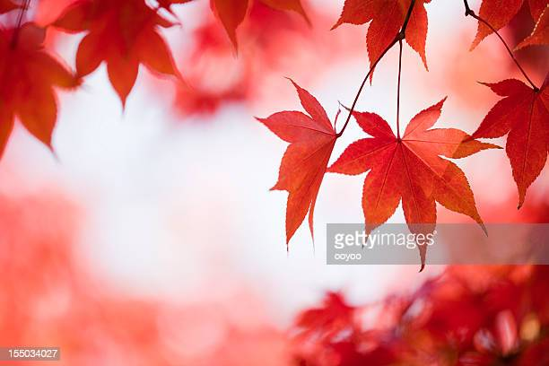 Herbst Rote Farben