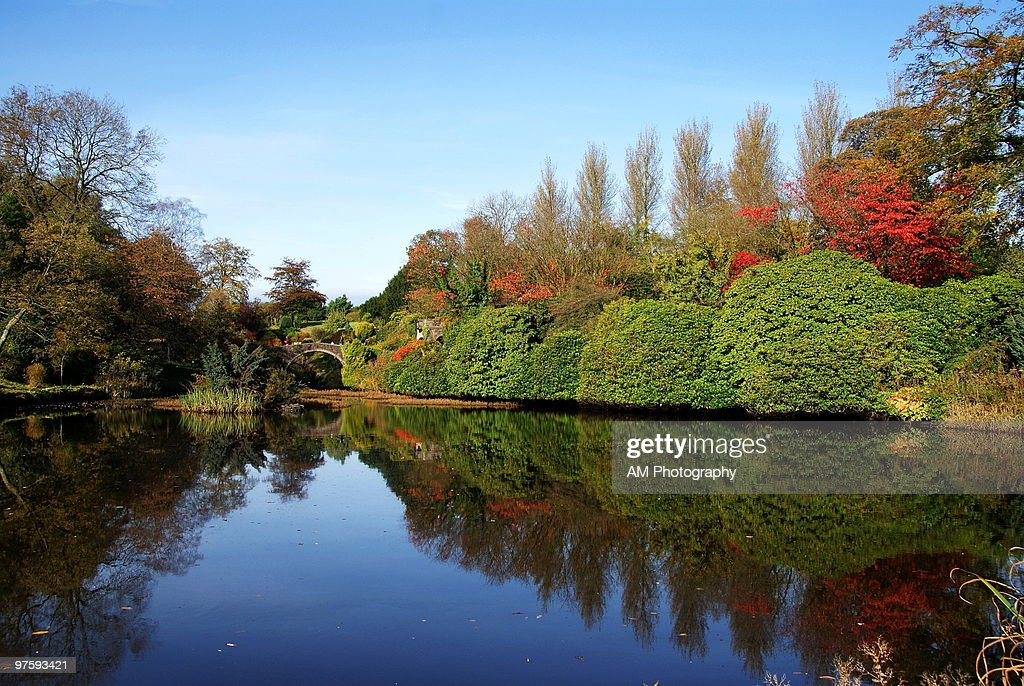 Autumn reflection in pond