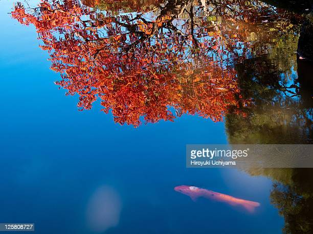 Autumn reflection on the pond