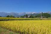 長野県白馬村の秋の田園と北アルプスの風景です。