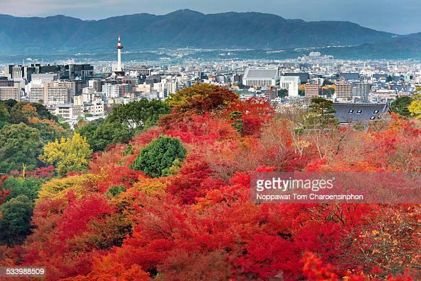 Autumn Scene in Kyoto