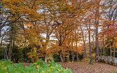 Autumn scenery of the garden in Fukushima, Japan
