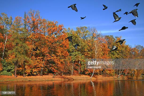 Autumn Scenery with Pigeons Flying