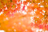 Autumn season colorful of tree and leaves  in Japan