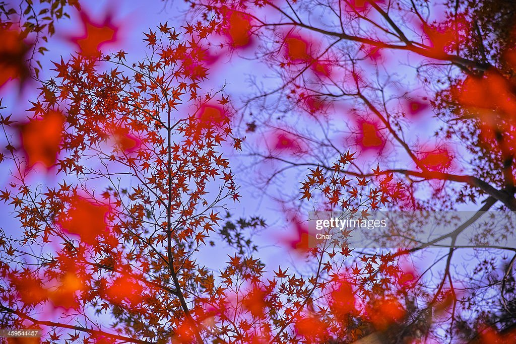 Autumn sky : Stock Photo