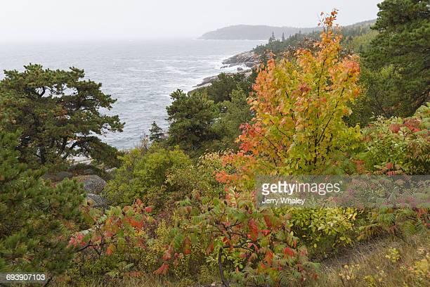 Autumn Storm, Acadia NP, Maine