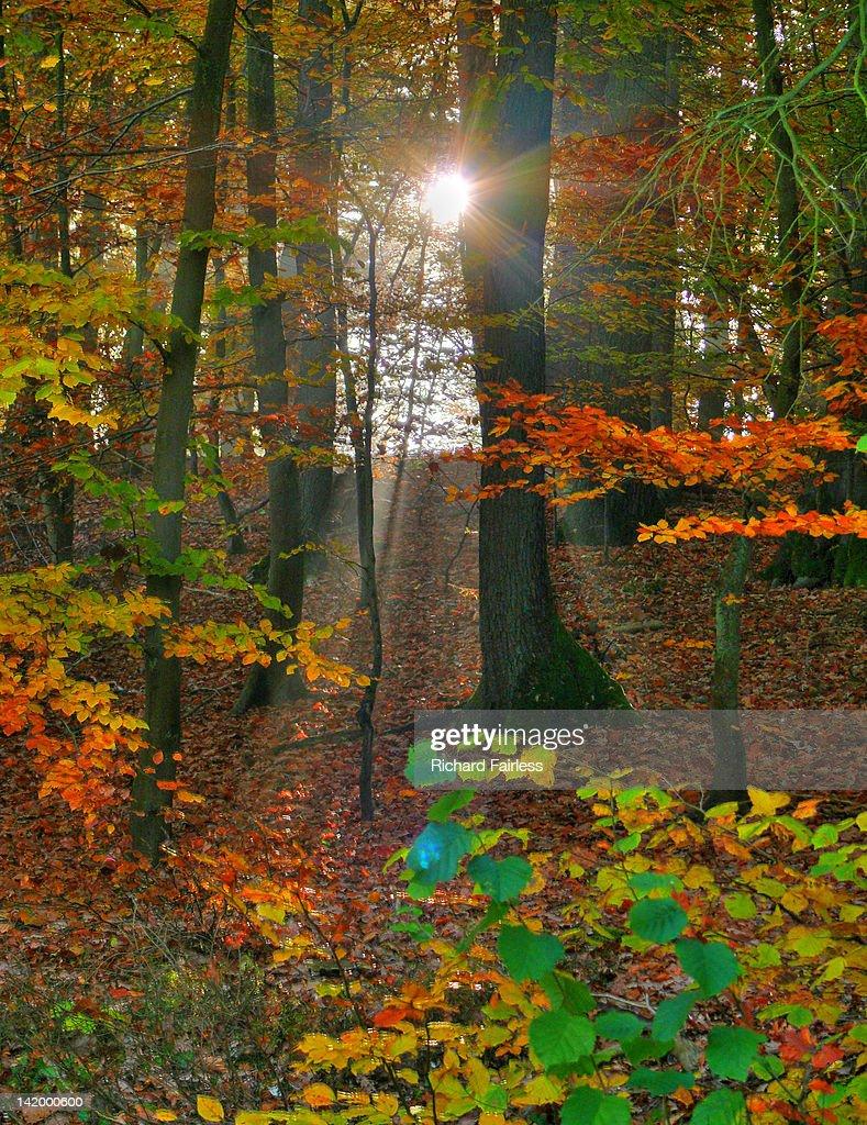 Autumn sun rays : Stock Photo