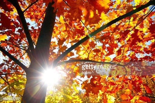 Otoño Sun Rays