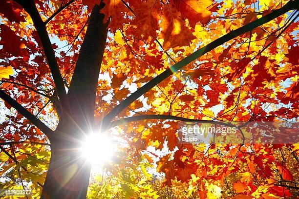Automne les rayons du soleil