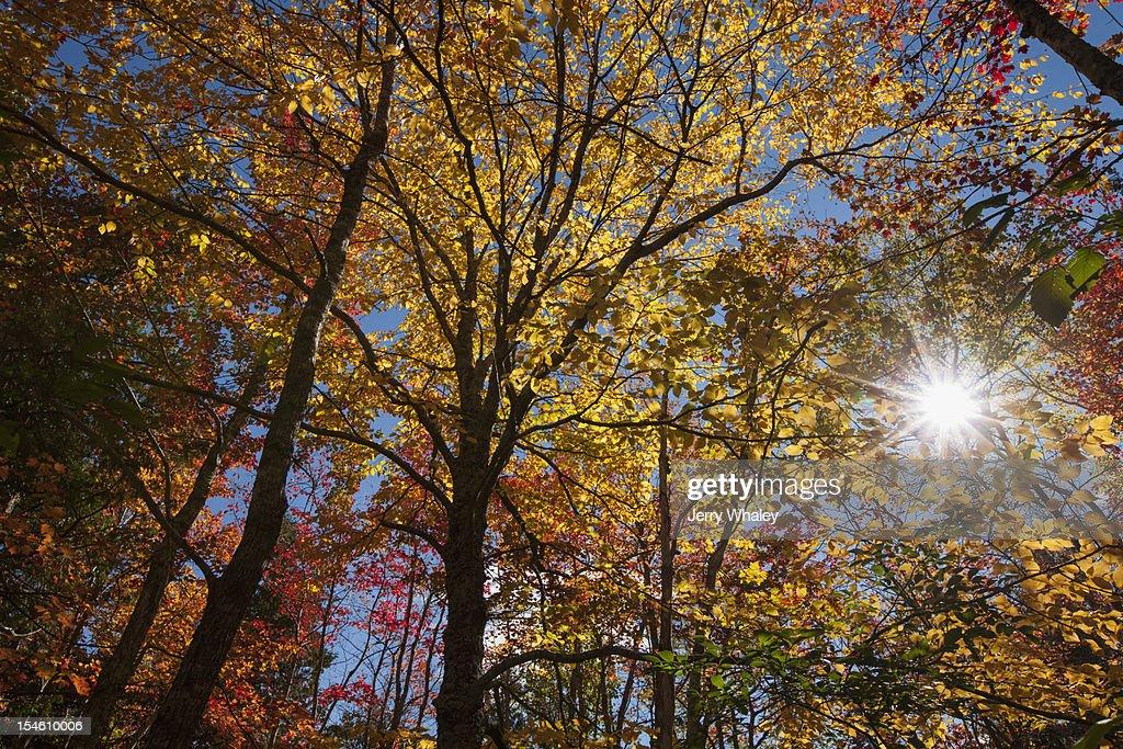 Autumn sunburst at Great Meadow : Stock Photo