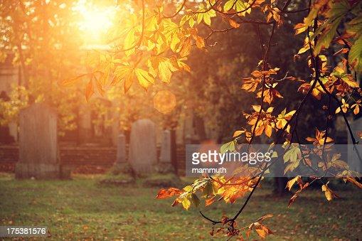 autumn sunlight in the cemetery