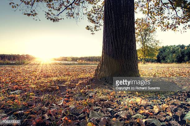 Schaumburg Stock Photos And Pictures Getty Images