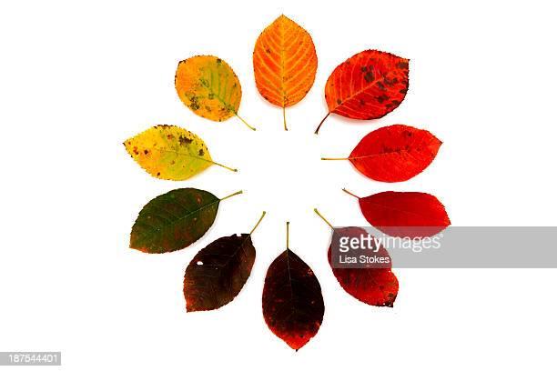 Autumn Ten