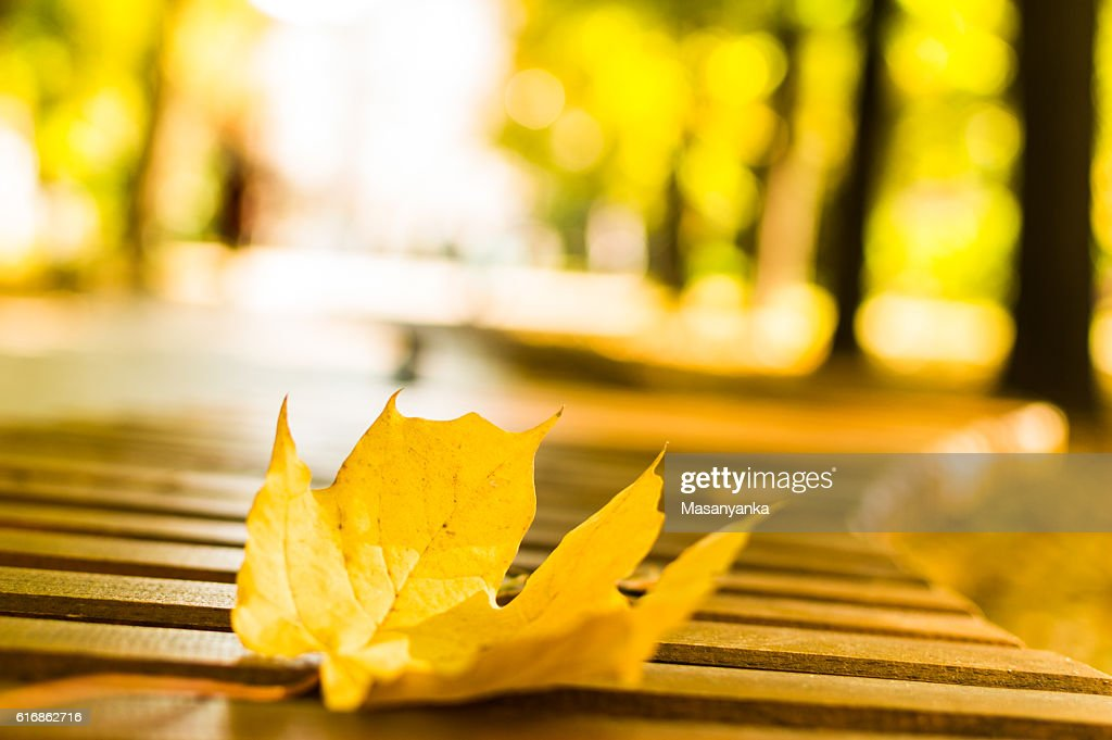Autumn - the yellow maple leaf on the bench in the park : Stock Photo