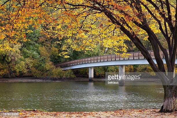 Autumn Tree and Bridge