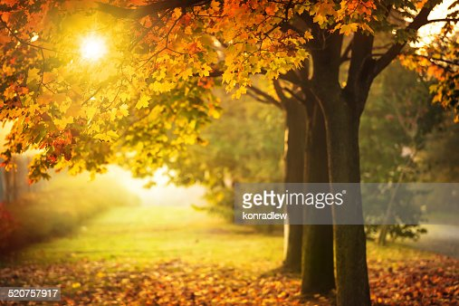 Autumn Tree and Sun during Sunset - Fall in Park