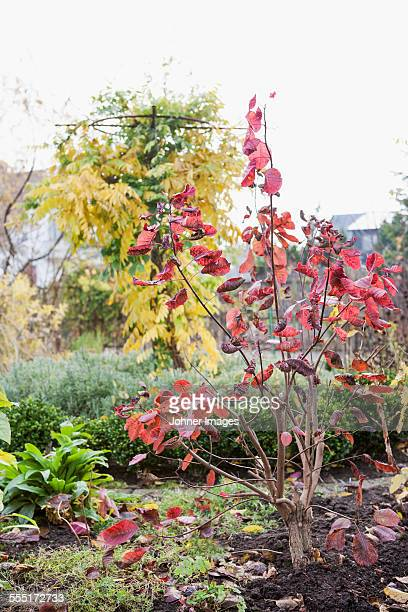 Autumn tree in garden