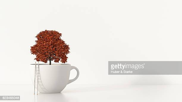 autumn tree in white cup